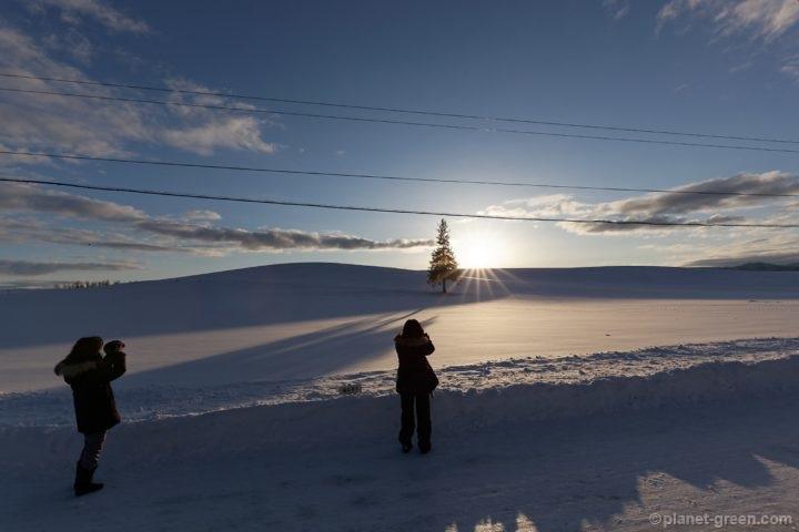 冬の美瑛・クリスマスツリーの木