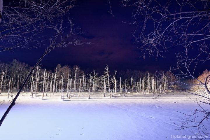 冬の美瑛・青い池のライトアップ