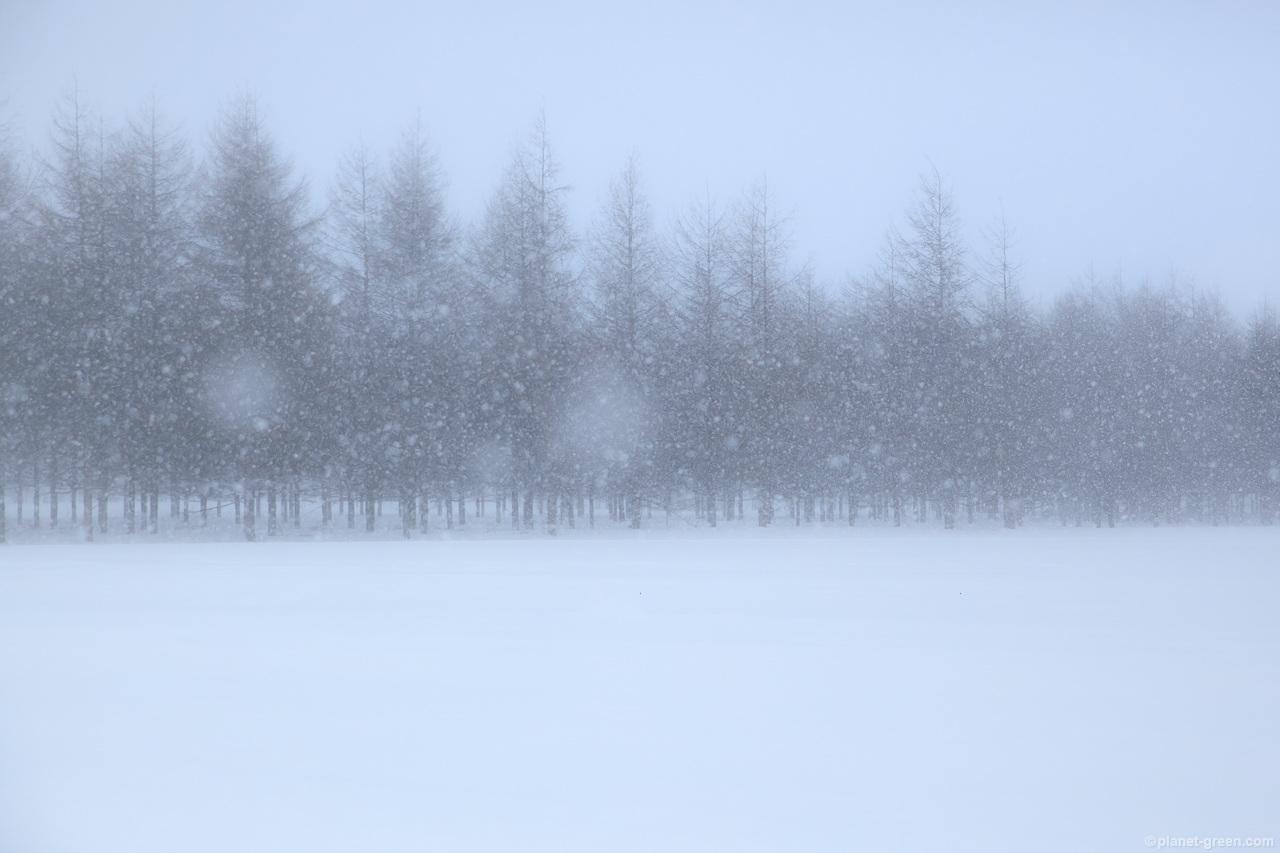 吹雪。モエレ沼公園にて。