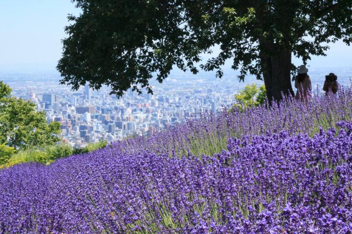 幌見峠のラベンダー園と札幌市街