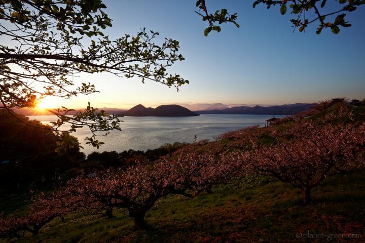 洞爺湖の梅と夕日