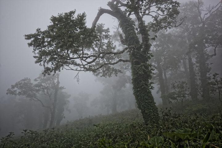 尻別岳の登山道にて